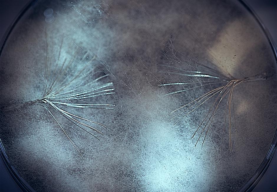 Myconnect_mycelium